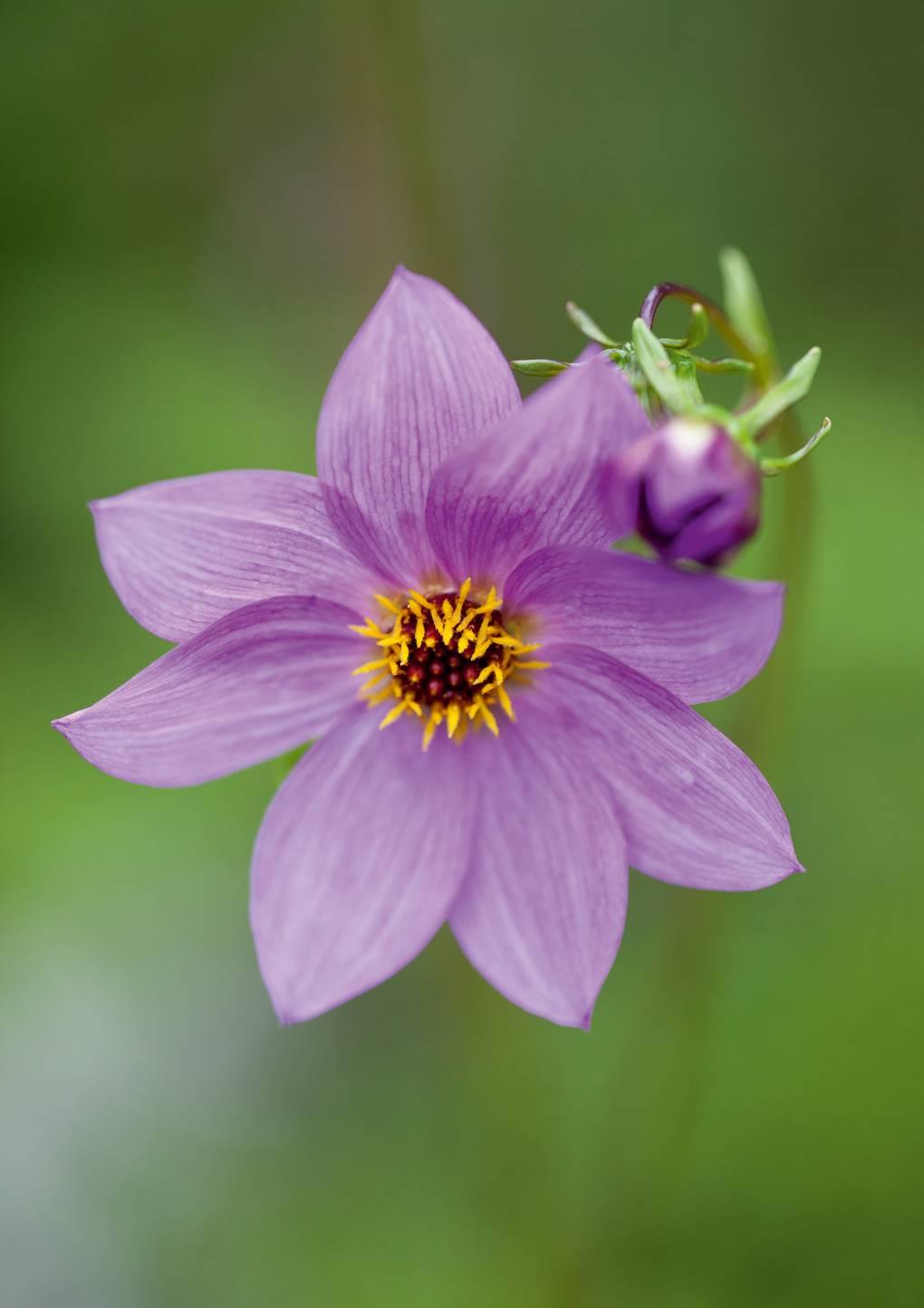 Best Perennials To Grow From Seed House Garden