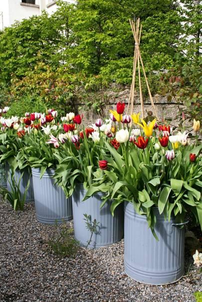 Dustbins as Plant Pots