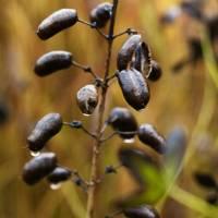 Seed Heads - Piet Oudolf's Dutch Garden