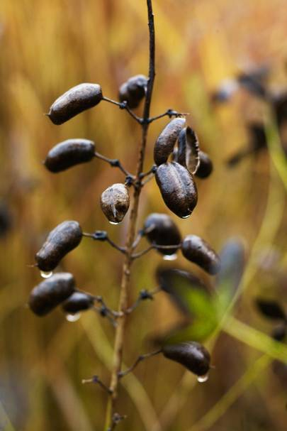 Seed Heads - Piet Oudolf's Dutch Garden