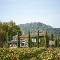 La Bastide: Vineyard