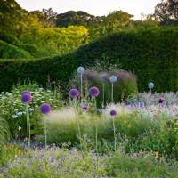 Dot Your Border With Alliums