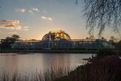 Kew Gardens Spicy Lates