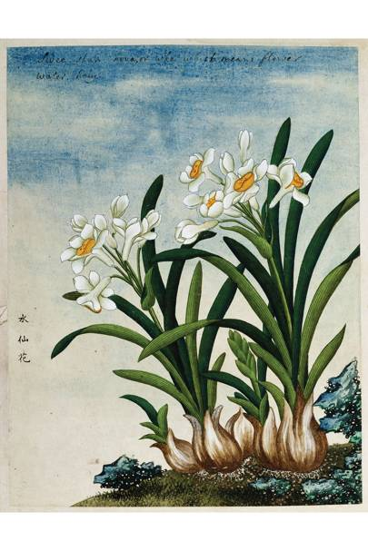 19th-century Chinese watercolour