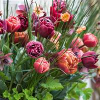 Tulips 'Antraciet', 'Brownie', and 'Copper Image' with Geum 'Mai Tai'