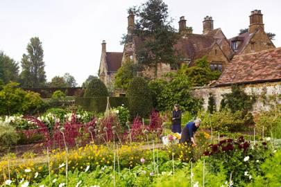 Walled Garden Flowers - An English Flower Garden