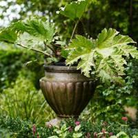 Plant Pot - Bunny Guinness' Cambridgeshire Garden