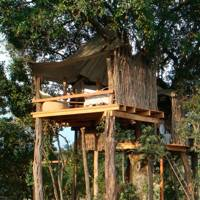 The Nest, Kenya