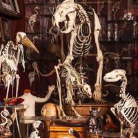 The Viktor Wynd Museum of Curiosities