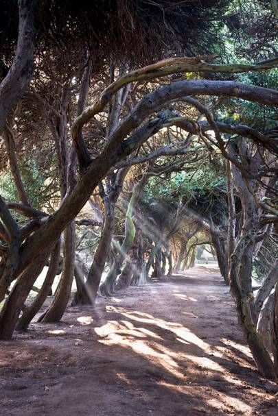 Yew Tunnel - Melbourne Hall | Outdoor Spaces