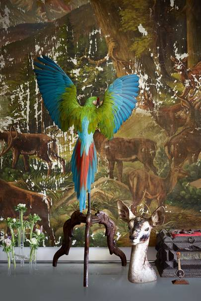 The Macaw