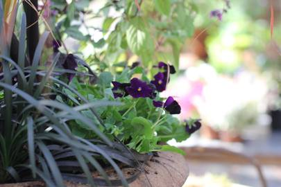 What to plant in october gardening advice house garden october is a busy month in the garden as we plant spring bulbs clear borders and pot up winter containers here are my top ten gardening jobs for this mightylinksfo