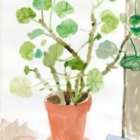 'Geraniums' by Isobel Brigham