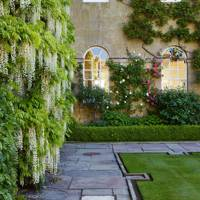 The White Wisteria