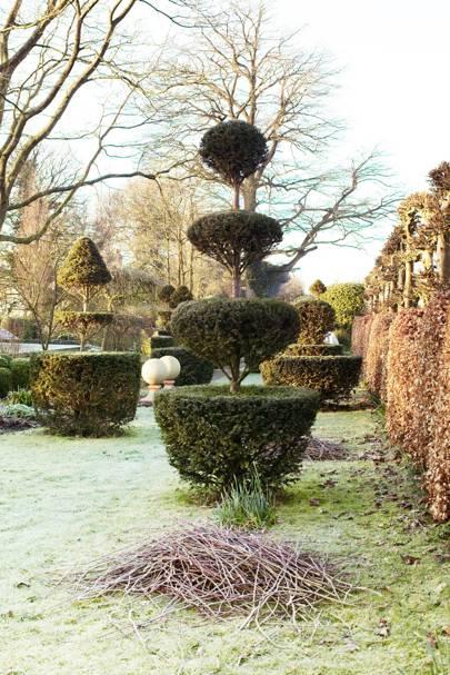 Round Topiary