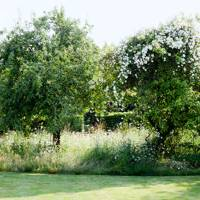 Grow Rambling Roses Up Old Apple Trees