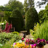Cut Flower Business - An English Flower Garden