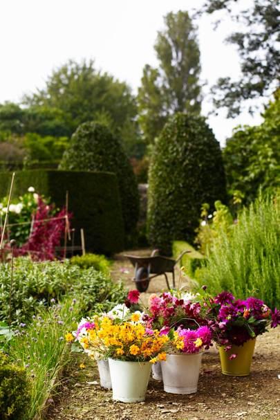 Cut Flower Business - An English Flower Garden