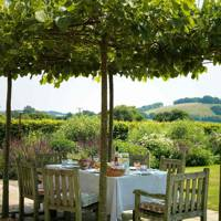 Tree Canopy Outdoor Dining Space