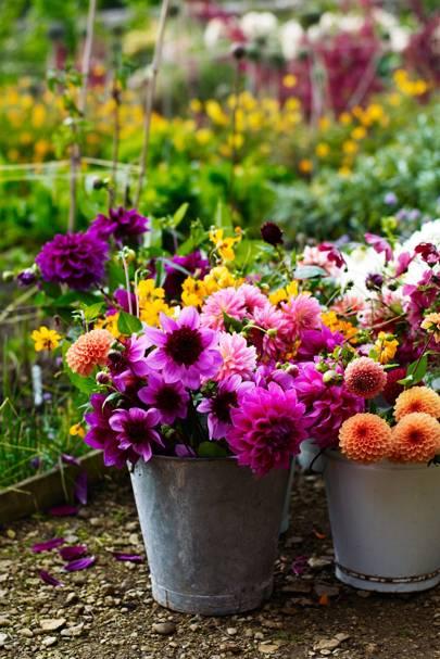 Small garden ideas - image HGWardingtonCardOne-002044-house-9sep16-Andrew-Montgomery_b on https://alldesingideas.com