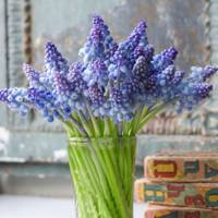 Beautiful Flowers Flower Pictures Designs House Garden