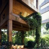 Climbing Plants - Cement Factory