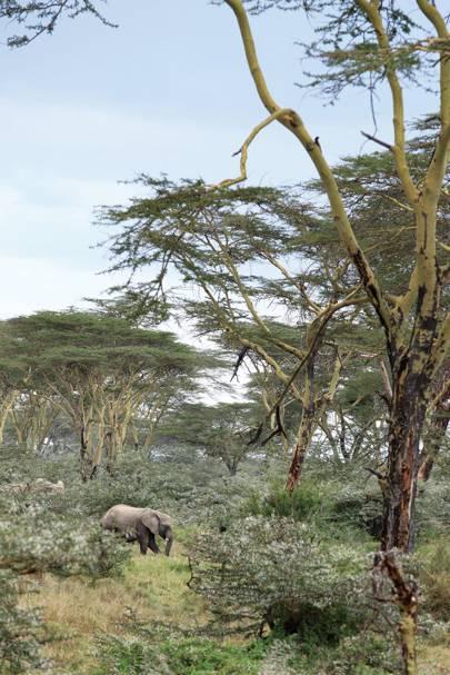Game Reserve - Segera Retreat Kenya