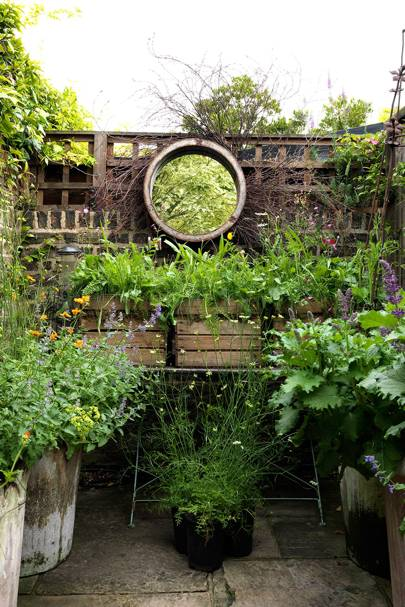 Beautiful Urban Vegetable Garden