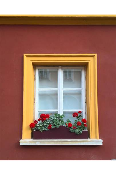 Window Box With Red Geraniums