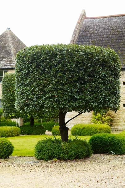 Topiary - Bunny Guinness' Cambridgeshire Garden