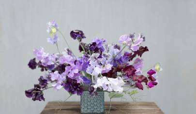 Growing Cut Flowers Part 4: Seed Success