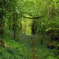 Woodland - Prince Charles' Welsh Home