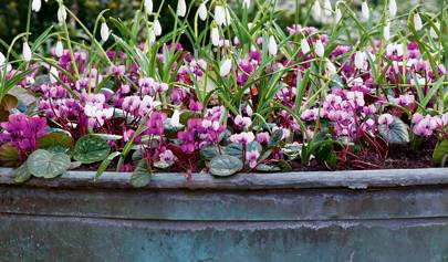 How to plant in pots and containers part 1: late winter