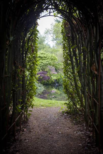 An Arch with a Beech Hedge