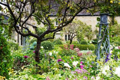 Fruit Tree - Bunny Guinness' Cambridgeshire Garden