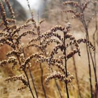 Skeletal Grasses - Piet Oudolf's Dutch Garden