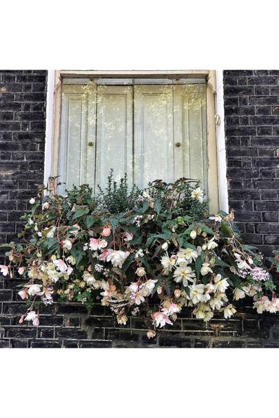Window Box with Begonias