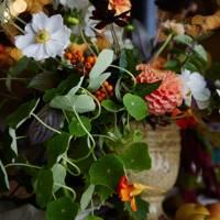 Horticultural Display