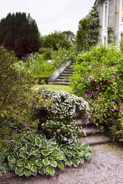 Steps to Terrace