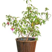 May 16: Kalinko Kalaw Planter in Brown, £20