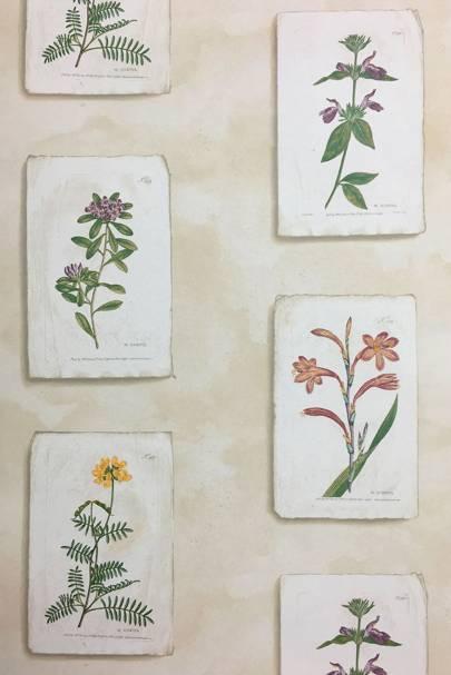 Curtis Botanical