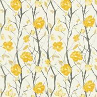 Sunflower Celandine