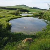 Pond - Scottish Borders New Build