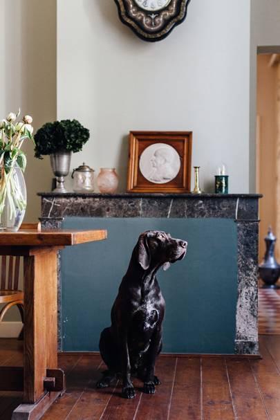 Dog | Mimi thorisson | French Interiors | Interior Design Inspiration