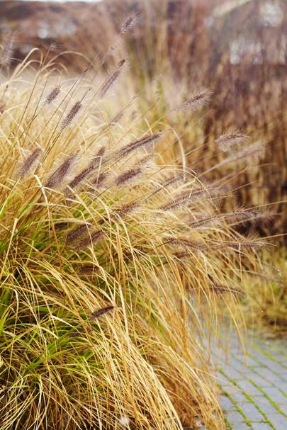 Autumn Grasses - Piet Oudolf's Dutch Garden