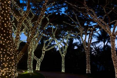 Fairy Light Wrapped Trees