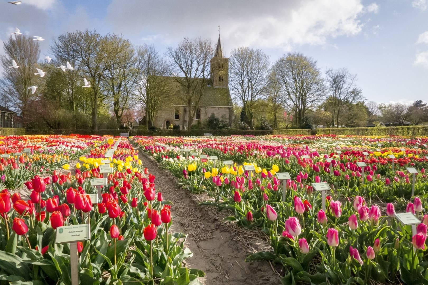 Amsterdam\'s Rare Tulip Garden | Outdoor Spaces | House & Garden