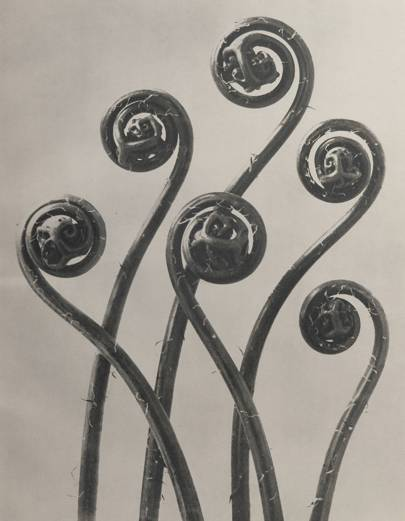 Karl Blossfeldt: The Wonder Garden of Nature, until April 14