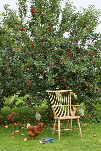 Apple Tree & Chickens