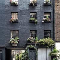 Jungle-like plants on a blue black wall